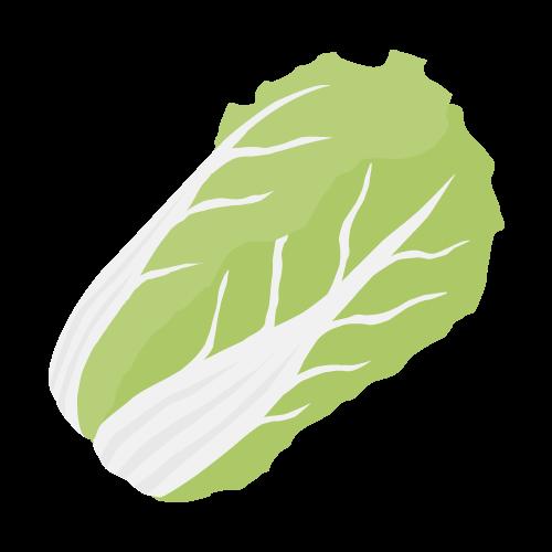 白菜のアイコン・イラスト