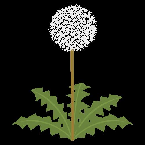 タンポポ(綿毛)の無料アイコン・イラスト素材