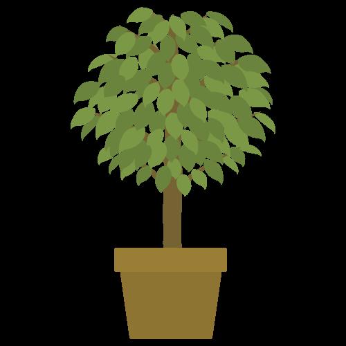 植木(ベンジャミン)の無料アイコン・イラスト素材