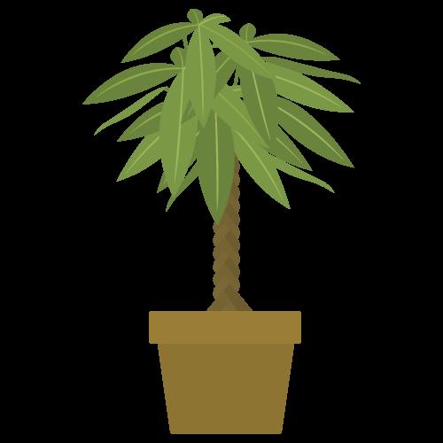 植木(パキラ)の無料アイコン・イラスト素材
