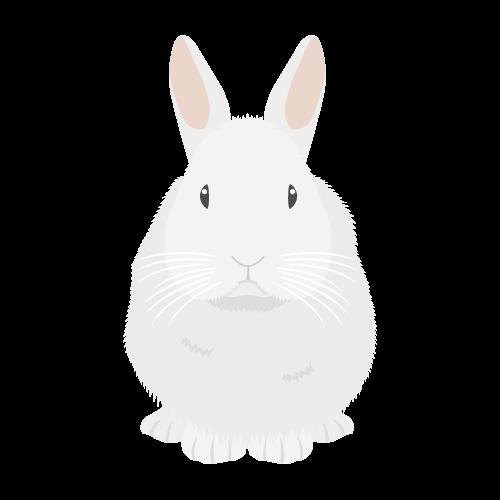 ウサギ(白)の無料アイコン・イラスト素材