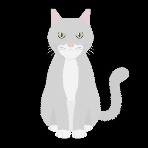 猫(灰白猫)の無料アイコン・イラスト素材