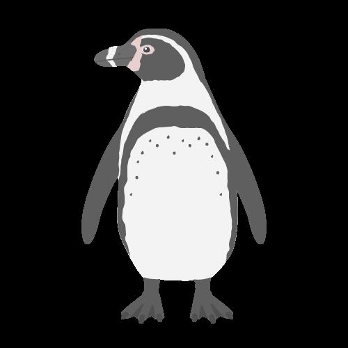 フンボルトペンギンの無料アイコン・イラスト素材