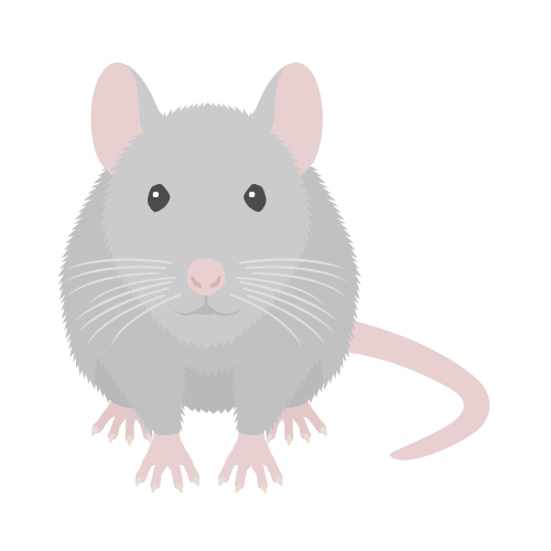 ネズミ(灰)の無料アイコン・イラスト素材