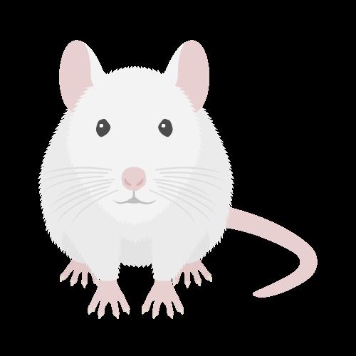 ネズミ(白)の無料アイコン・イラスト素材