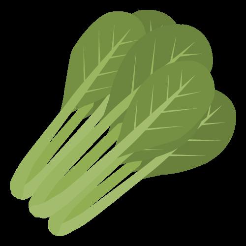 小松菜の無料アイコン・イラスト素材