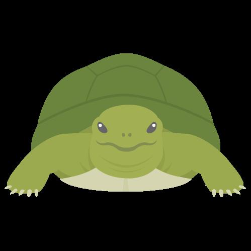 亀の無料アイコン・イラスト素材
